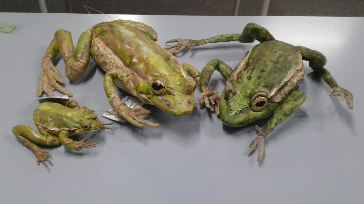 Year 4 EcoCentre | Southern Bell Frog Project | 2021